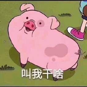 火爆的猪猪表情包,快来领养一只吧
