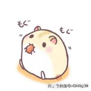 萌萌的动物图片小故事!