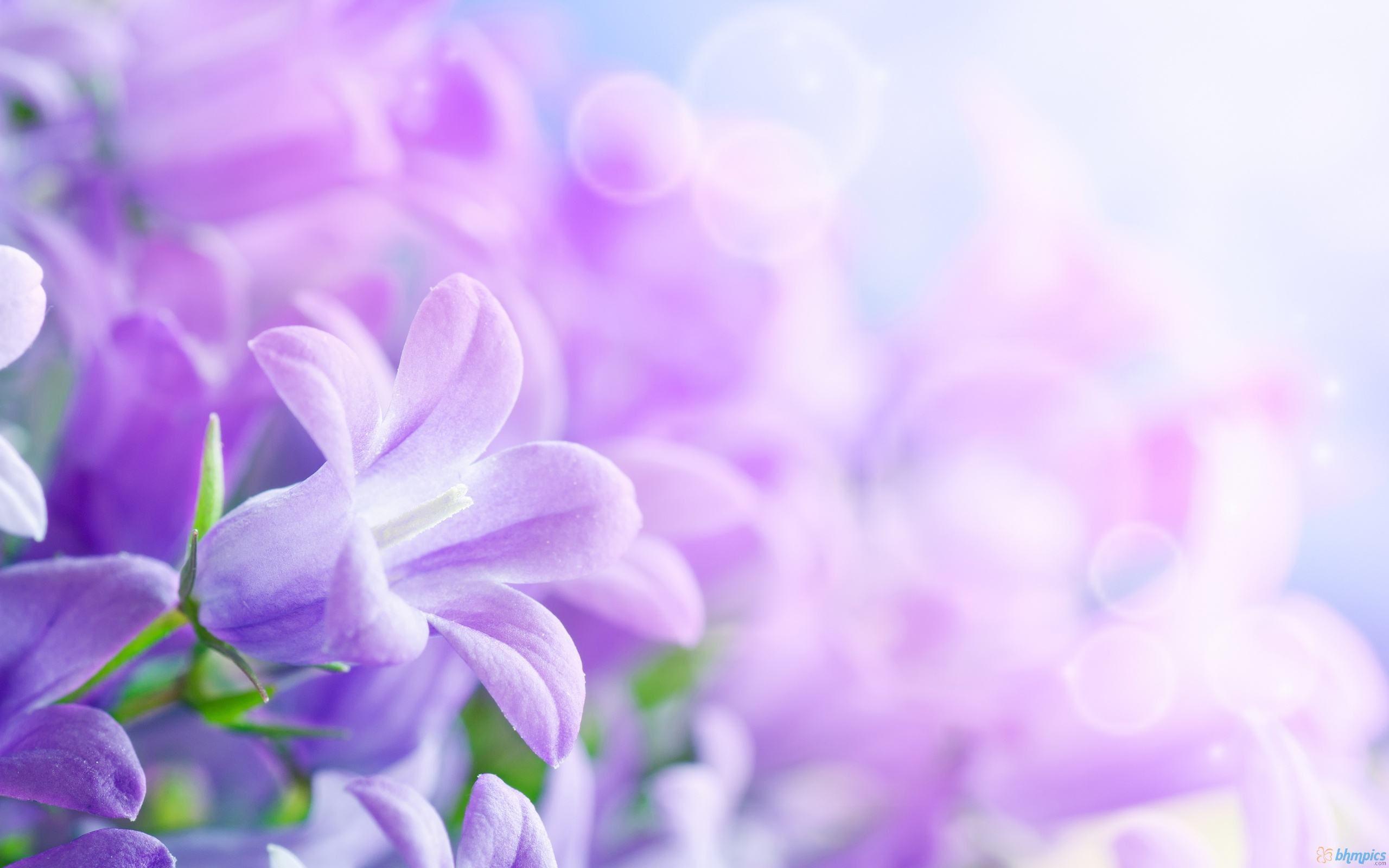 紫色花精灵手绘