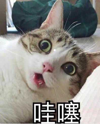 可爱猫带字图片